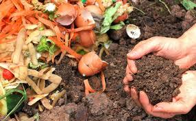 4 Manfaat Sampah Organik Dan Organic